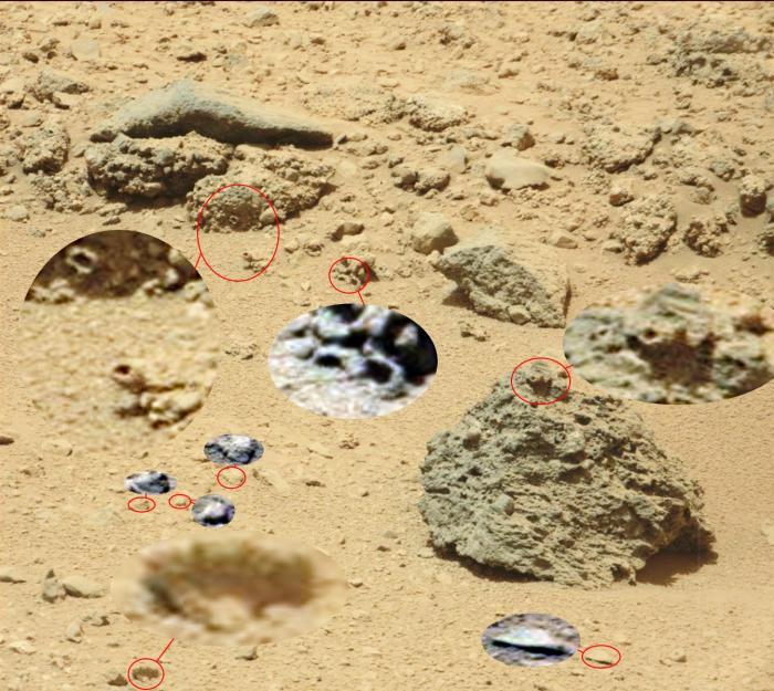 fossiles d'un fond marin
