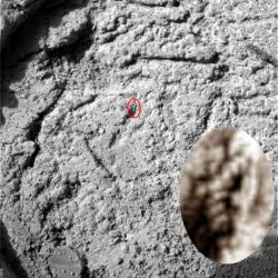 Fossiles marin 7