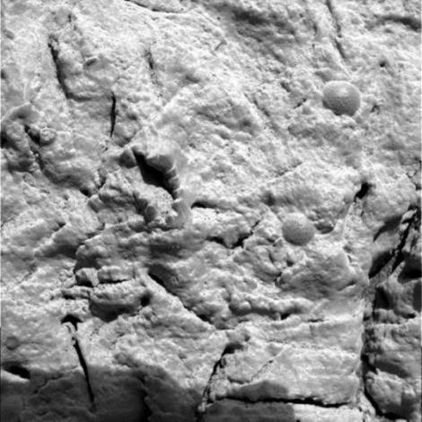 Fossiles marin