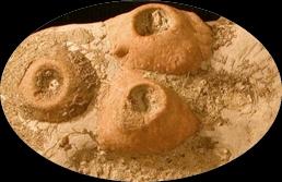 Fossiles marin1 1