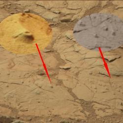 Fossiles marin1