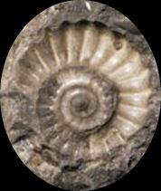 Fossiles marin2 1