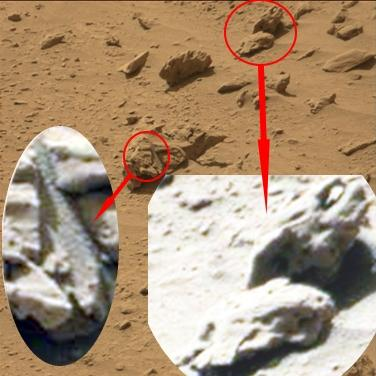 Fossiles marin3