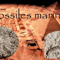 Fossiles marins