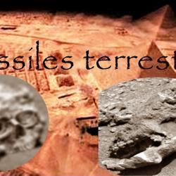 Fossiles terrestre