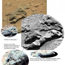 Fossiles terrestre3