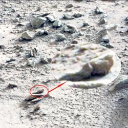 Fossiles terrestre7
